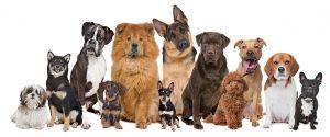 חשיפה הדרגתית לכלבים בעזרת טיפול CBT