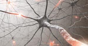 מערכת העצבים גוף או נפש